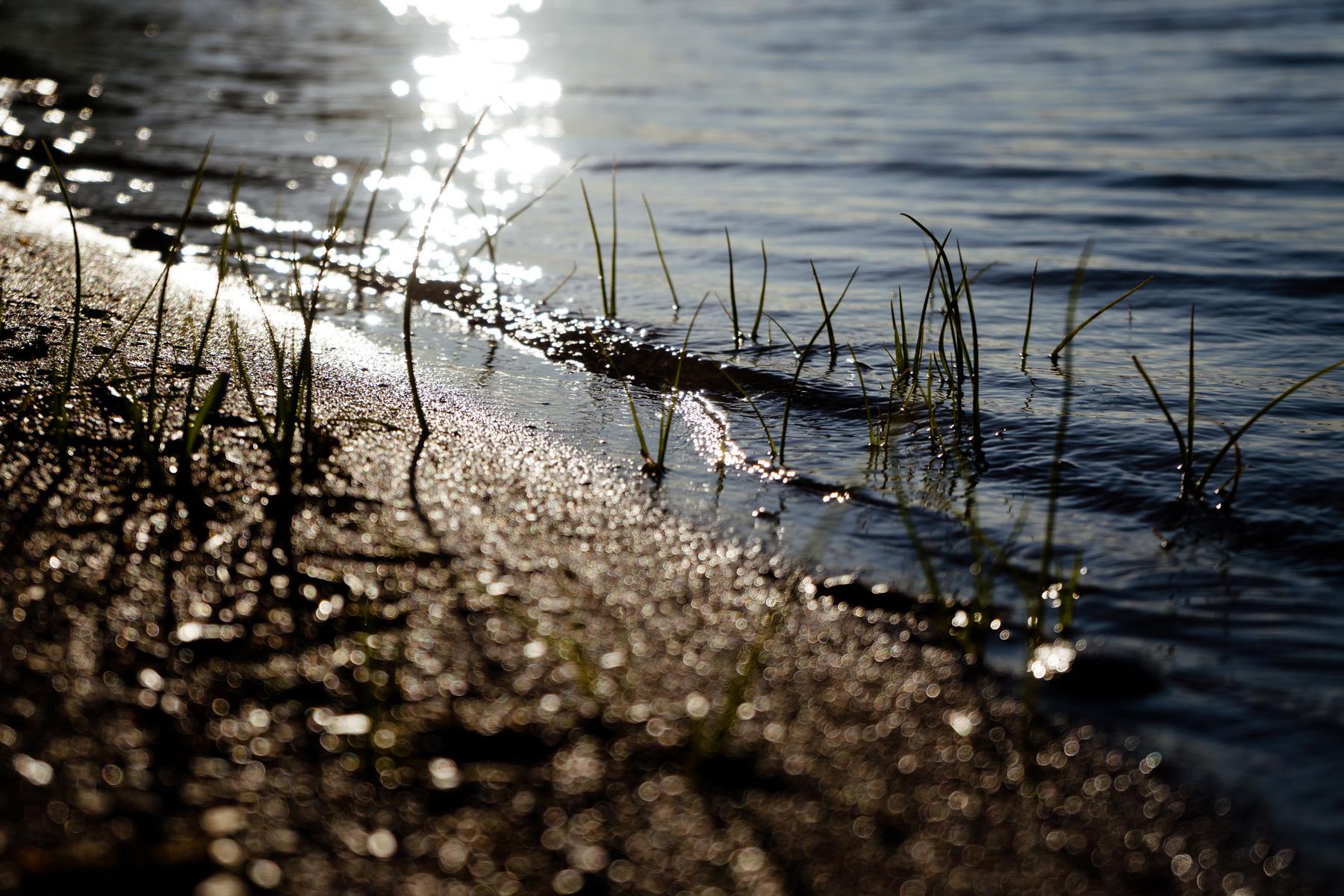summer-2018-scenes-kandise-brown-photographer-38